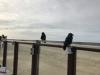 Toeschouwers aan het strand bij Sunset